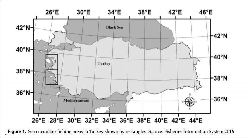 土耳其法律允许捕捞海参的区域