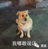 吴亦凡,鞠婧祎,你们好高贵啊…插图(2)