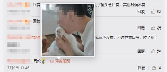 《我爱我猫》影评:说她卖惨,真的误会她了