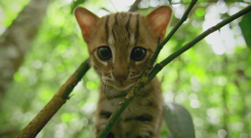"""《大猫 BIG CATS》影评:豆瓣 9.5,吐血安利这部""""三集片"""",入股绝对不亏"""